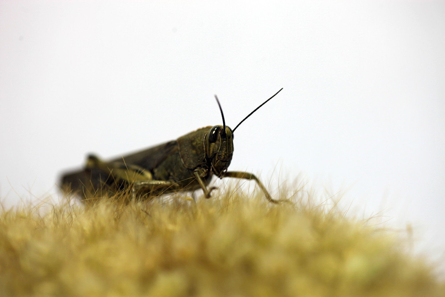 monsieur plant grasshopper insect justgrowit 			copyright2014