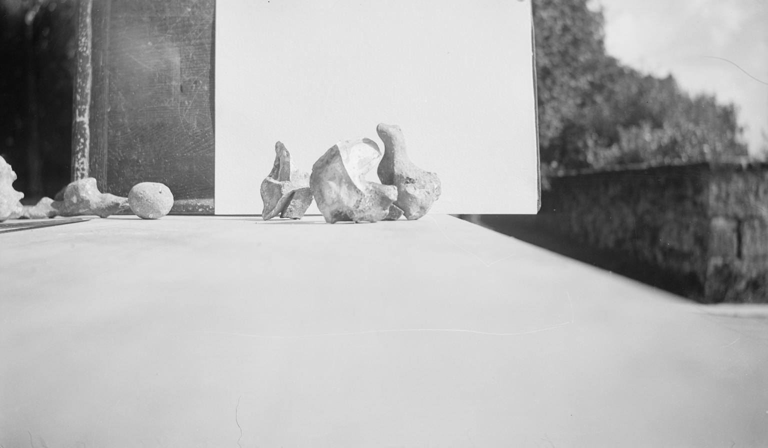 Paul Nash artist photographer nature The Life of the 			Inanimate Object Country Life Tate archiveplatform green1