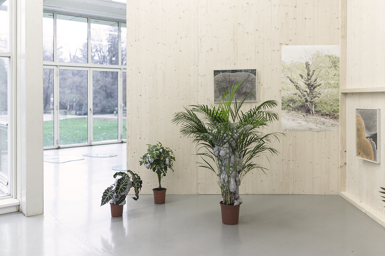 nature to be regained laura pugno forum stadtpark graz exhibition ecology earth paradise artist platform green
